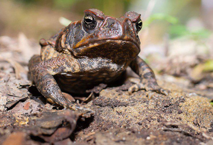 Frog sachet